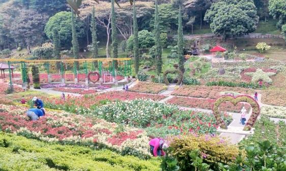 Selecta Garden